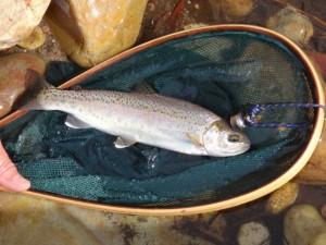 John's FishEP